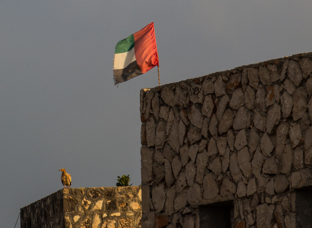 Zuid-Jemen wil liever solo verder; als Republiek Zuid-Arabië
