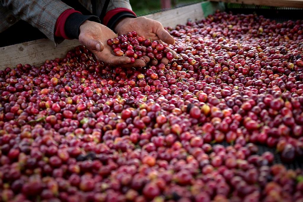 Hoe geplaagd Jemen ons kopje koffie kan redden